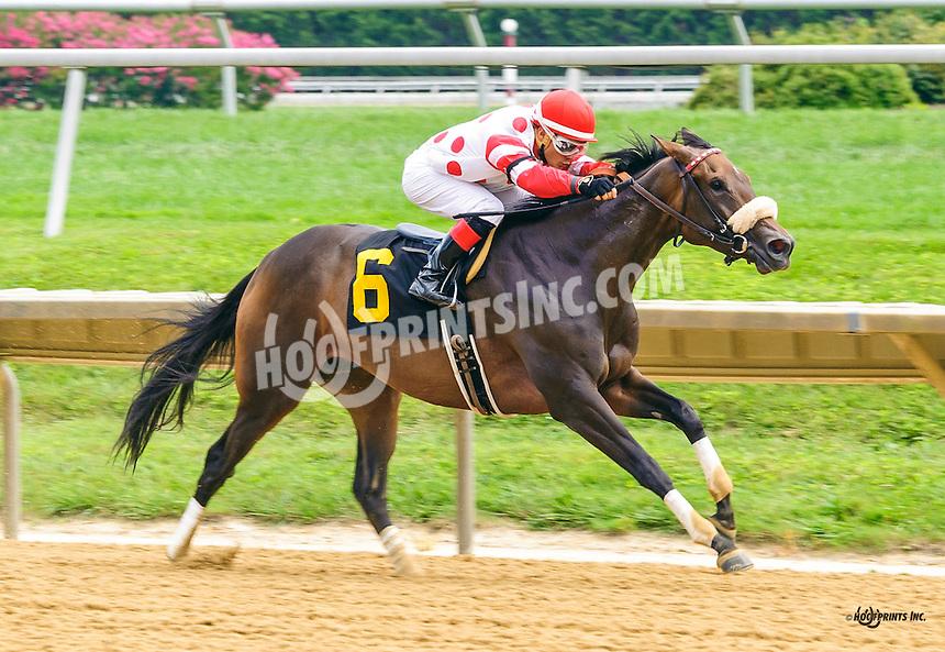 Hazel Eyed Girl winning at Delaware Park on 8/8/16