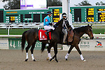 February 21, 2015: St Joe Bay with Florent Geroux up in the Risen Star Stakes at the New Orleans Fairgrounds Risen Star Stakes Day. Steve Dalmado/ESW/CSM