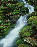 Buffalo National River, AR<br /> Spring falls and moss covered rocks above Clark's Creek in Lost Canyon