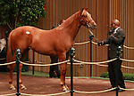 17 September 2011  .Hip #1357 Candy Ride - Double Flyight colt sold for $200,000.
