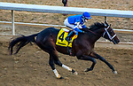 OZONE PARK, NEW YORK - FEB 03: Avery Island, #4, ridden by Joe Bravo, wins the Withers Stakes for 3 year olds, Aqueduct Racetrack, on February 3, 2018 in Ozone Park, New York. ( Photo by Dan Heary/Eclipse Sportswire/Getty Images)