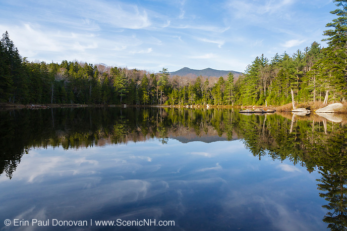 Black Pond on the side of Black Pond Trail in Lincoln, New Hampshire. This forest was logged during the East Branch & Lincoln Railroad era, which as was a logging railroad in operation from 1893-1948.