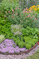 Herb Garden : Parsley, thyme, variegated marjoram, sage, herbs and flowers interplanted together, coreopsis, Salvia microphylla