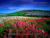 Tom Mackie, LANDSCAPES, LANDSCHAFTEN, PAISAJES, FOTO, photos,+4x5, 5x4, bloom, blooming, calm, color, colorful, colour, composition, country, countryside, Eire, EU, Europa, Europe, Europe+an, expanse, flower, flowers, horizontal, horizontally, horizontals, Ireland, Irish, largeformat, meadow, peace, peaceful, pe+acefulness, rule of thirds, view,4x5, 5x4, bloom, blooming, calm, color, colorful, colour, composition, country, countryside,+Eire, EU, Europa, Europe, European, expanse, flower, flowers, horizontal, horizontally, horizontals, Ireland, Irish, largefo+,GBTM030260-2,#L#, EVERYDAY ,Ireland