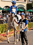 November 17, 2018: #2 Coliseum, ridden by Joseph Talamo, in the paddock before race 1 on November 17, 2018, at Del Mar Thoroughbred Club in Del Mar, CA. ( Photo by Casey Phillips/Eclipse Sportswire/CSM)