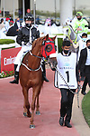 March 27 2021: AF ALWAJEL (AE) #1, in the post parade for the Dubai Kahayla Classic at Meydan Racecourse, Dubai, UAE. Shamela Hanley/Eclipse Sportswire/CSM