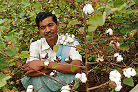 INDIA Odisha, fairtrade cotton farmer of Agrocel near Rayagada, farmer in cotton field  /<br /> INDIEN Orissa Raygada, fairtrade Baumwollbauer von Agrocel, Dorf Badaraising , Farmer Bujiga Zillakara 50 Jahre