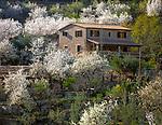 Spanien, Balearen, Mallorca, Mandelbluete und Finca bei Fornalutx   Spain, Balearic Islands, Mallorca, Almond blossom near Fornalutx
