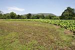 Crop Line