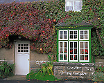 County Galway, Ireland<br /> Geraniums in window of an ivy covered cottage in the village of Cong