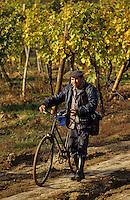 Europe/Hongrie/Tokay/Env Sarospatak: Les vignes du château Megyer - Vendangeur regagnant son foyer
