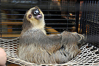 A Sloth for sale at 980,000 yen (10.904 US$) at the Noah Inner City Zoo, a pet shop that sells exotic animals. The Noah Inner City Zoo is a pet shop that sells exotic animals. The 'zoo' claims to have more than 300 species for sale, many of which are rare and some are even endangered.