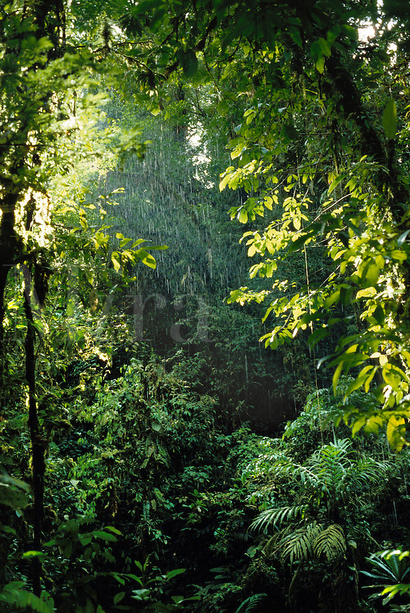 Beginning of tropical rainstorm in rainforest in Choco Department, Colombia..