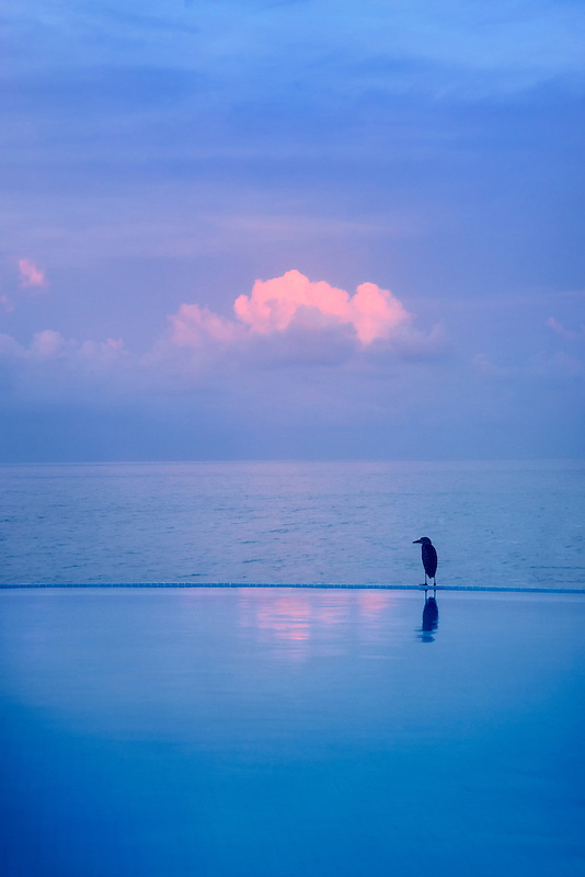 Heron on edge of infinity pool. Punta Mita, Mexico