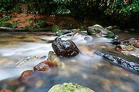 Rock in Rainforest Stream at Lamington National Park, Queensland