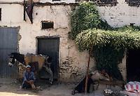 Afrique/Afrique du Nord/Maghreb/Maroc/Meknès : La médina - Marchand avec son âne