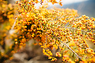 Image Ref: YR135<br /> Location: Cathedral Range State Park<br /> Date: 02.11.15