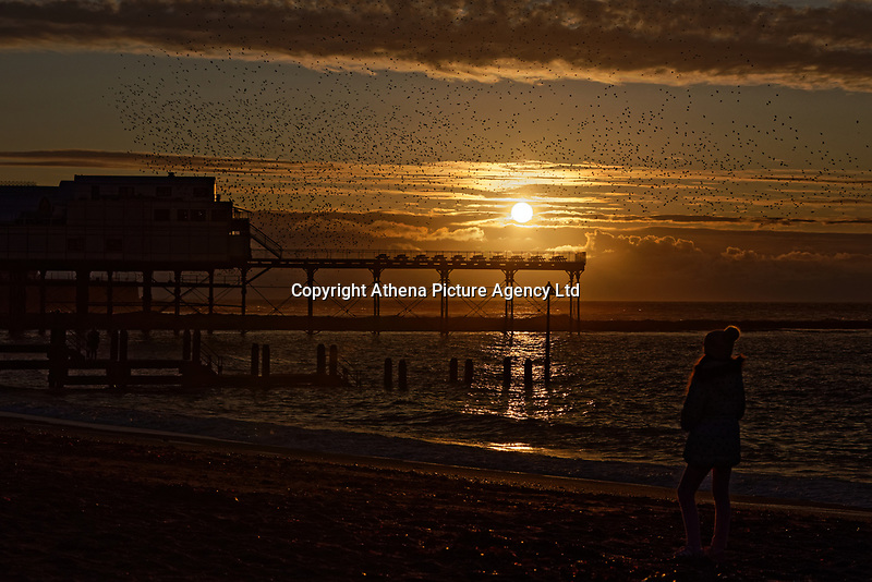A girl observes the starlings murmuration taking place during sunset over the pier in Aberystwyth, Wales, UK. Sunday 03 November 2019