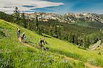 Biking the wasatch Crest trail above Park City Utah