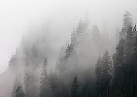 Fog Enveloping Cascade Mountain Range, Washington, USA.