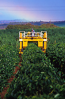 Machinery being used in coffee and sugarcane farming, Maui
