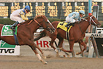 """11 27 2010: 34 - 1 longshot Jersey Town with Cornelio Velasquez win the 22nd running of the Grade I Hill N"""" Dale Cigar Mile for 3-year olds & up, at 1 mile, Aqueduct Racetrack, Jamaica, NY. Trainer Barclay Tagg. Owners Charles E. Fipke."""