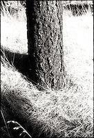 Tree trunk<br />