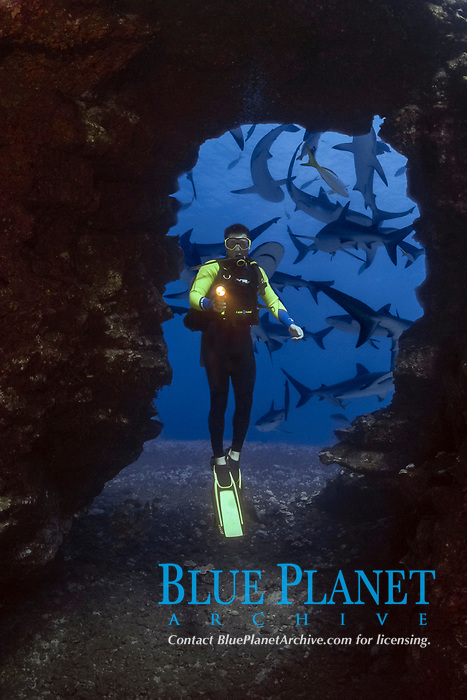 Diver (MR) and Caribbean Reef Sharks, Carcharhinus perezii. Digital Composite.