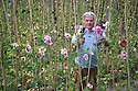 18/06/16<br /> <br /> As the sun finally comes out and temperatures soar, champion sweet-pea grower George Pearson (75) picks blooms from his allotment in Bakewell, in the Derbyshire Peak District..<br /> <br /> All Rights Reserved, F Stop Press Ltd. +44 (0)1773 550665