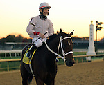 LOUISVILLE, KY - NOV 12: Jockey Denny Velazquez smiles on Hay Dakota after winning the 13th running of the G3 Commonwealth Turf Cup at Churchill Downs, Louisville, Kentucky. Owner Alice Mettler, trainer Joel Berndt. (Photo by Mary M. Meek/Eclipse Sportswire/Getty Images)