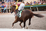 HALLANDALE BEACH, FL - FEBRUARY 04: Irish War Cry galloping out past the wire after winning the Holy Bull Stakes (G2), at Gulfstream Park, Hallandale Beach, FL. (Photo by Arron Haggart/Eclipse Sportswire/Getty Images)