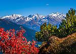 Oesterreich, Tirol, Zillertal: Herbststimmung entlang der Zillertaler Hoehenstrasse und die schon schneebedeckten Gipfel der Zillertaler Alpen | Austria, Tyrol, Ziller Valley: autumn scenery at Panorama road and the already snow covered summits of Ziller-Valley Alps
