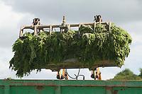 Ramassage des algues vertes