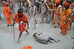 One Naga Sadhu (Naked saint) fell down on the street while  hurrying for the first Sahi Snan (Royal Bath) at Kumbh Mela  on 12th Feb 2010 . These naga sadhus represent the warrior cult in the Hindu religion and they practice extreme austerity in which they abstain from clothes, relationships and carnal desires. Weathered by such extreme measures they attain prowess that is way beyond a common man's strength. 12th February 2010. Haridwar, Uttarakhand, India, Arindam Mukherjee