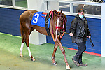 February 28, 2021: Miss Antioch #3 , ridden by Richard E. Eramia in the Downthedustyroad Breeders Stakes for trainer Allen Milligan at Oaklawn Park in Hot Springs,  Arkansas.  Ted McClenning/Eclipse Sportswire/CSM