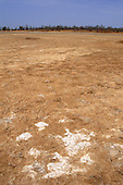 The Gambia. Salt deposits due to desertification following a reduction in annual rainfall.