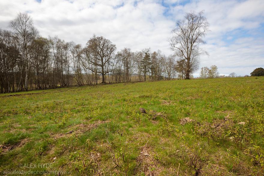 Habitat of Field Cricket (Gryllus campestris) Sussex, UK. April.