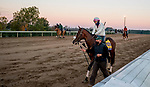 October 31, 2020: Tiz The Law, trained by trainer Barclay Tagg, heads to the track in preparation for the Breeders' Cup Classic Keeneland Racetrack in Lexington, Kentucky on October 31, 2020. Scott Serio/Eclipse Sportswire/Breeders Cup/CSM