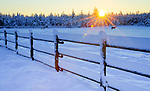 Idaho, North, Athol. Horses in a snow covered pasture at sunrise.