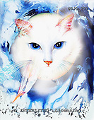 Marie, REALISTIC ANIMALS, REALISTISCHE TIERE, ANIMALES REALISTICOS, paintings+++++,USJO207,#A# ,Joan Marie cat
