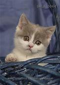Carl, ANIMALS, photos, kitten, blue basket(SWLA3064,#A#) Katzen, gatos