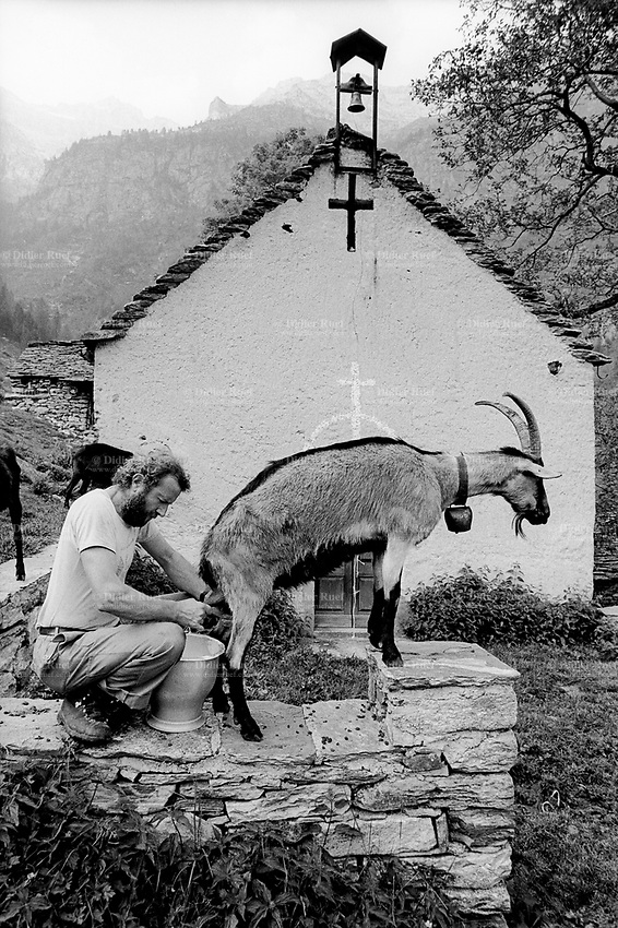 Switzerland. Canton Ticino. Verzasca valley. Piche Negro Alp. MIchele Sonognini milks the goat. Catholic church and the Holy Cross. Manual labor. Labour force. Season spent by the goats in mountain pastures. Swiss alpine farmers. Alps mountains peasants.  © 1996 Didier Ruef