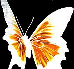 Sunset Butterflies