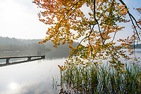 Herbst in einem Mischwald am Ufer des Schumellensee, Boitzenburger Land, Uckermark, Brandenburg, Deutschland
