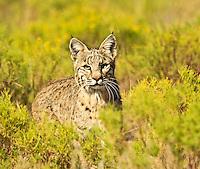 Wildlife In The Wild