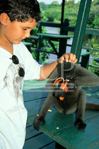 Ariau Tower Jungle Lodge Hotel, Rio Negro, Amazonas State, Brazil. Boy scratching a woolly monkey's head while it eats a banana.