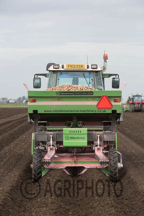 Planting potatoes in the Cambridgeshire Fens<br /> Picture Tim Scrivener 07850 303986