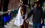 HALLANDALE BEACH, FL - JANUARY 25: Gun Runner walks shed row morning workouts as horses prepare for the Pegasus World Cup Invitational at Gulfstream Park Race Track on January 25, 2018 in Hallandale Beach, Florida. (Photo by Scott Serio/Eclipse Sportswire/Breeders Cup)