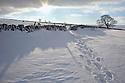 Tracks through deep snow, near Foolow, Peak District National Park, Derbyshire, UK, December.