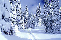 snow, mountains, Switzerland, Vaud, Jura Mountains, Europe, A trail runs through a snow covered forest of evergreens in the winter in the Jura Mountains.